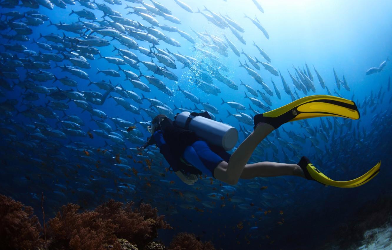 podvodnyy-peyzazh-dayving