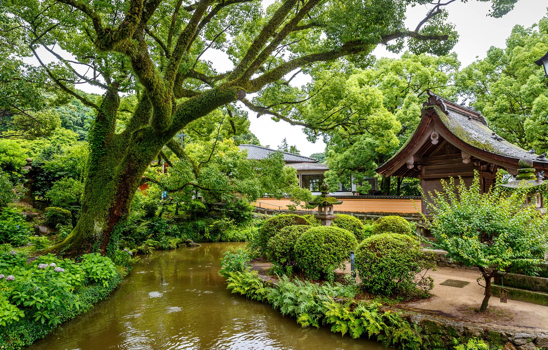 singapur-park-prud-zelen-kusty-derevia-dizain