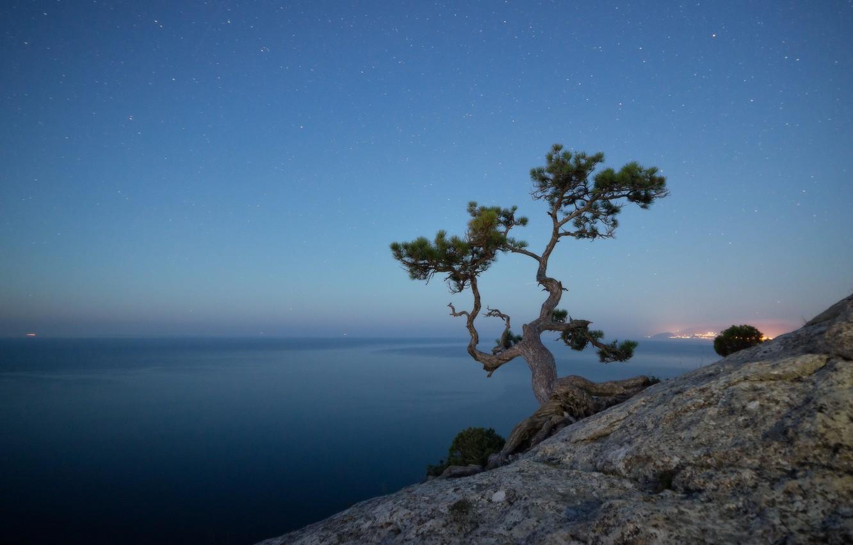 priroda-peizazh-krym-novyi-svet-more-skala-derevo-sosna-vech