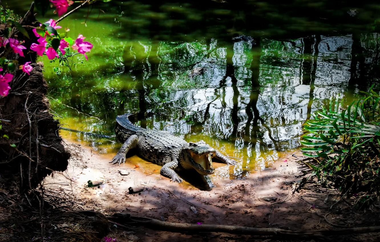 vetnam-park-krokodil