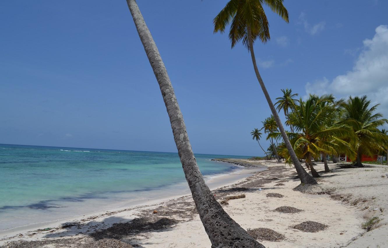 palma-palmy-dominikana-plyazh
