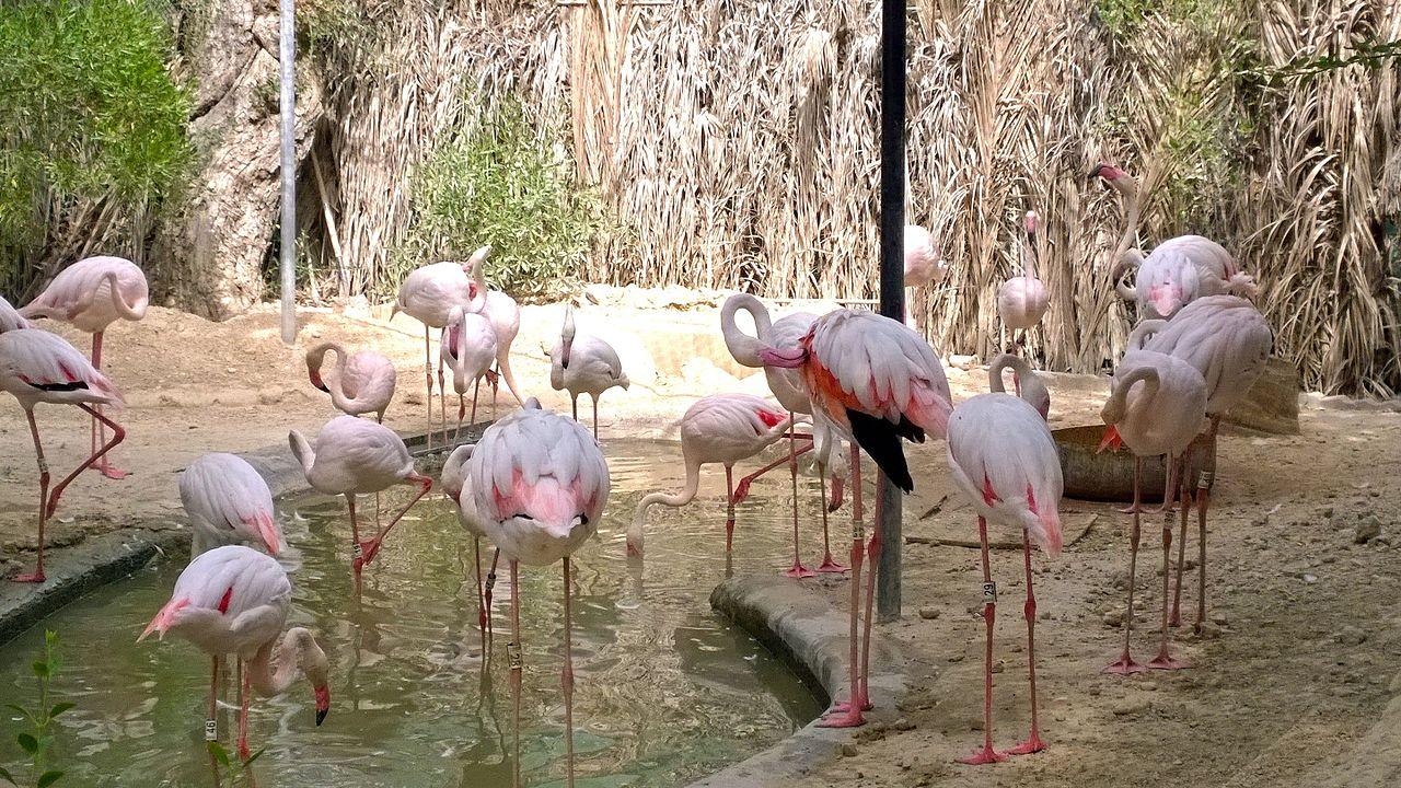 zoo-oae