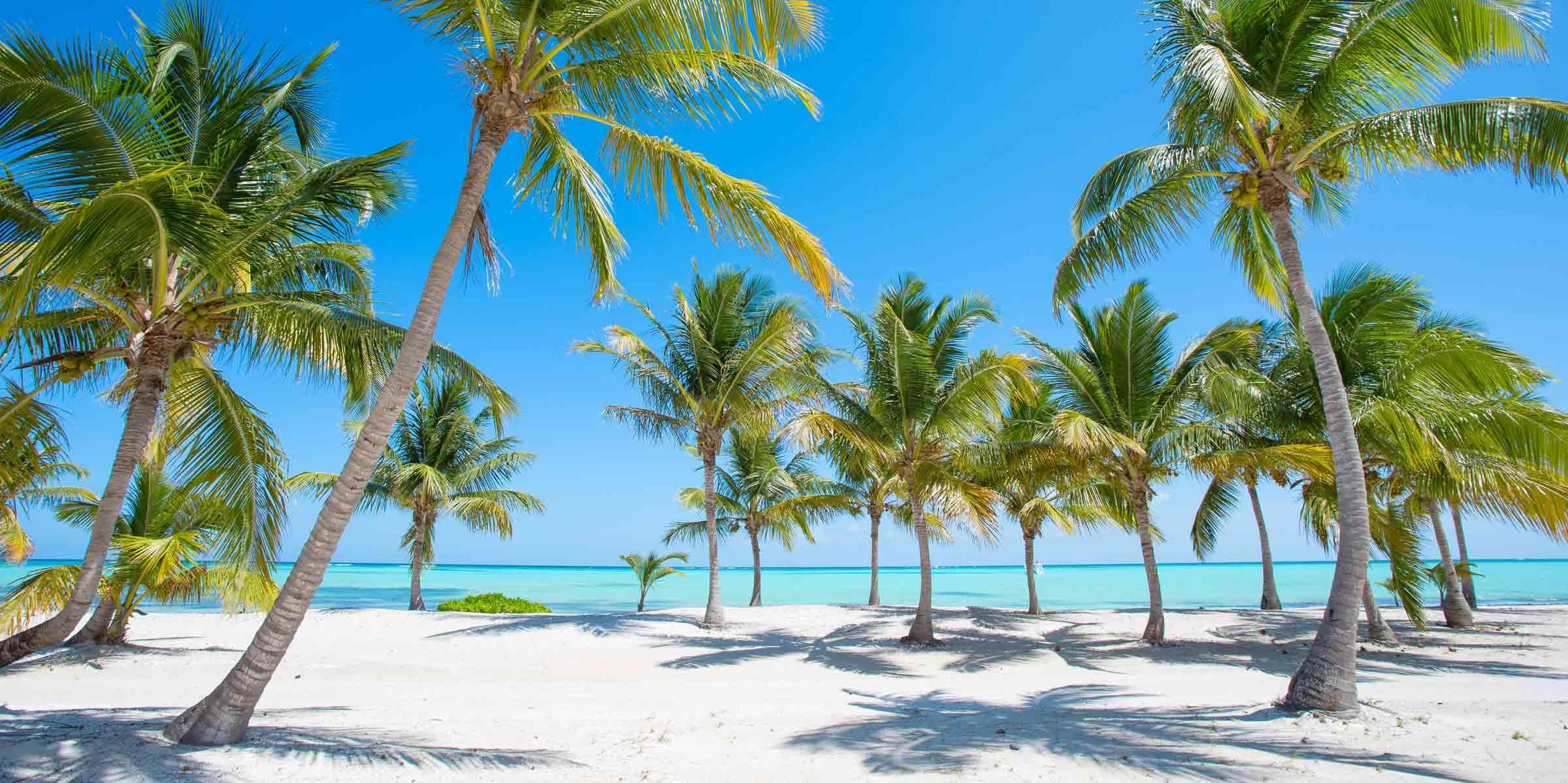 dominikana-palmy