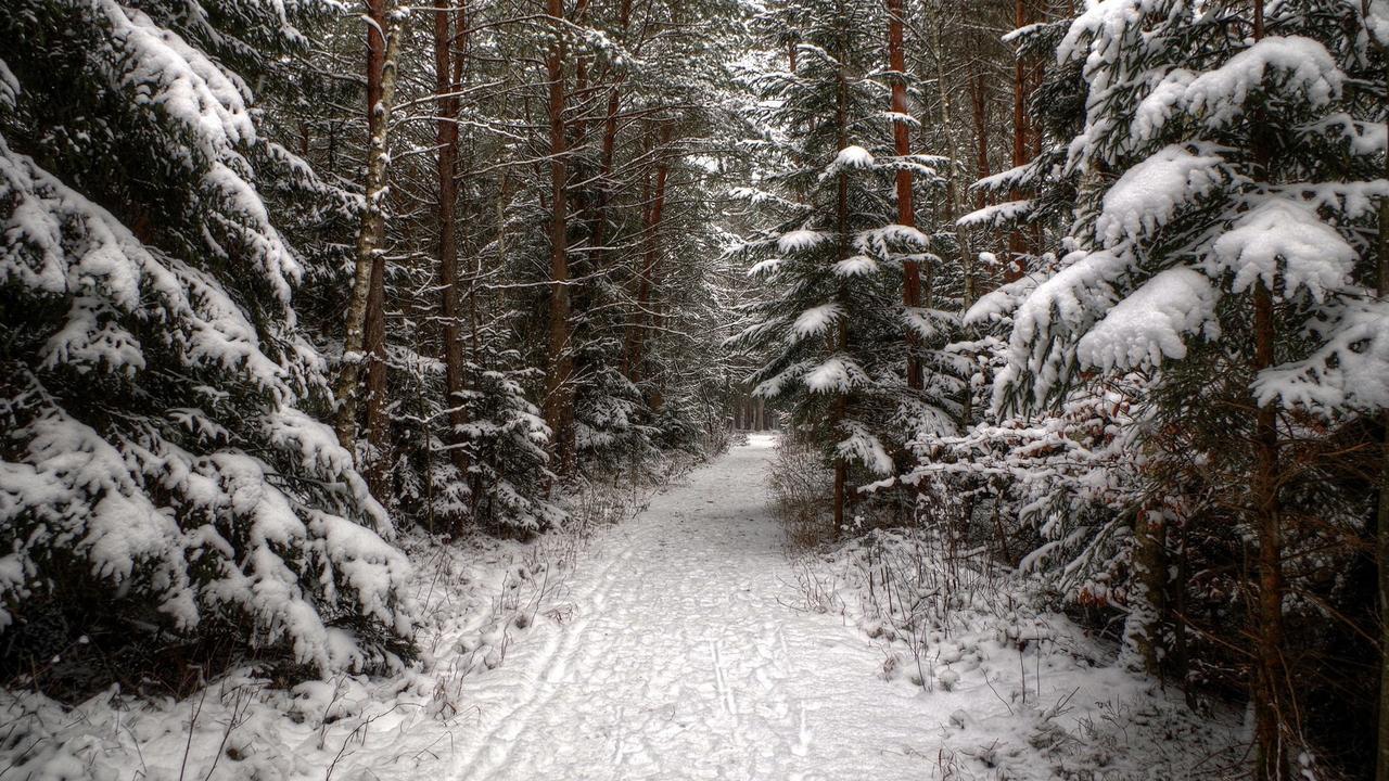 zagorodny-lepota-les